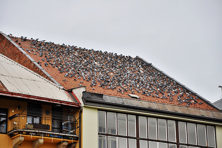 A2B Pest Control are able to install spikes to deter birds from roofs in Kirkby In Ashfield.